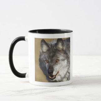 Mug Loup (lupus de Canis)