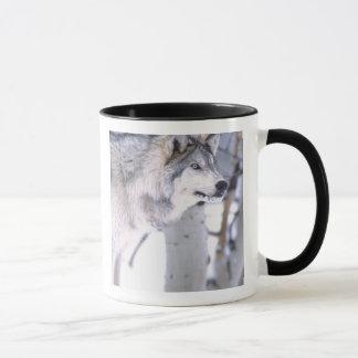 Mug Lupus de loup, de Canis de bois de construction,