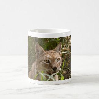 Mug lynx sibérien 004