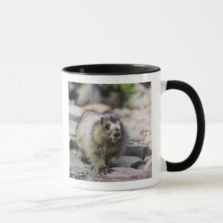 Mug Marmot blanchi, caligata de Marmota, jeune avec