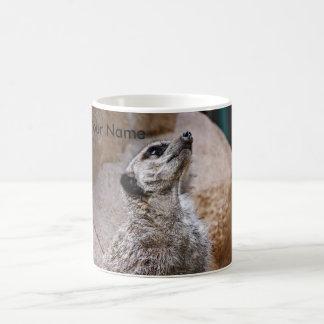 Mug Meerkat - recherchant