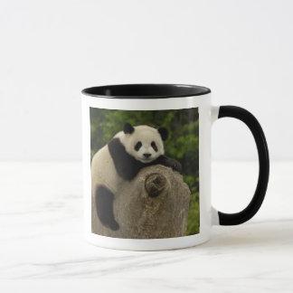Mug Melanoleuca d'Ailuropoda de bébé de panda géant)