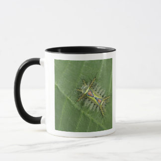 Mug Mite de Saddleback, espèces d'Acharia, toxiques
