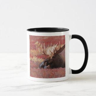 Mug N.A., Etats-Unis, Alaska, parc national de Denali,