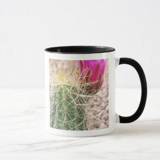 Mug N.A., Etats-Unis, AZ, Phoenix, abandonnent