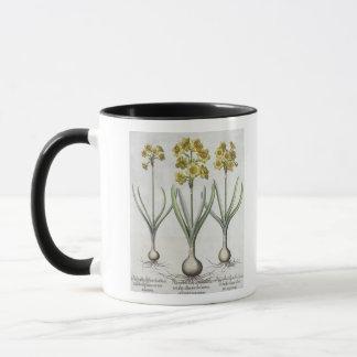 Mug Narcisses de Tazetta, du 'Hortus l'Eystettensis