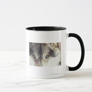 Mug Nom latin : Lupus de Canis
