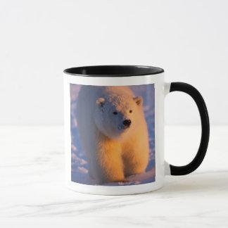 Mug ours blanc, maritimus d'Ursus, petit animal sur le