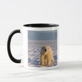 Mug ours blanc, maritimus d'Ursus, sur la glace et la