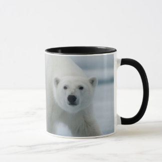 Mug Ours blanc, Ursus Maritimus, adulte