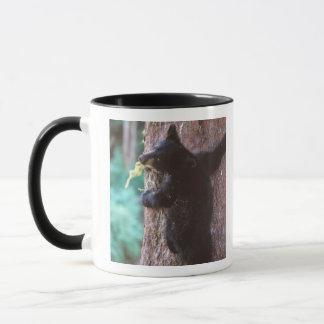 Mug ours noir, Ursus américanus, petit animal dans