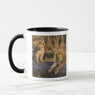 Mug Petits animaux de lion sur le rondin, Panthera