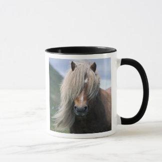 Mug Poney du R-U, Ecosse, Îles Shetland, Shetland