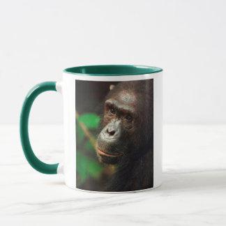 Mug Portrait de chimpanzé (troglodytes de casserole)