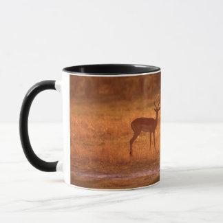 Mug RAM d'impala (Aepyceros Melampus) au coucher du