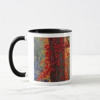 Mug Rouge lumineux de plante grimpante de Virginie en