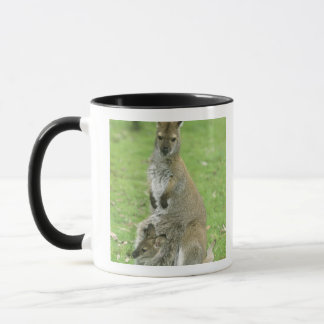 Mug Rufogriseus à col rouge de wallaby, de Macropus),