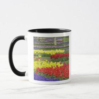 Mug Tulipes, jacinthe de raisin, et jonquilles, 2