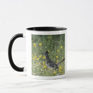 Mug Un plus grand Roadrunner, californianus de