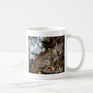 Mug Un Sibérien de sourire Lynx