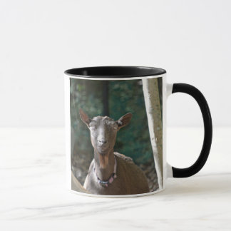 Mug Vieille chèvre belle