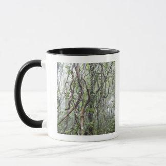 Mug vigne et branches tordues dans la forêt tropicale