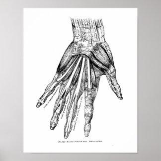 Muscles médicaux vintages de dessin de la main