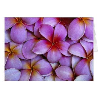 N.A., Etats-Unis, Maui, Hawaï. Fleurs roses de Carte