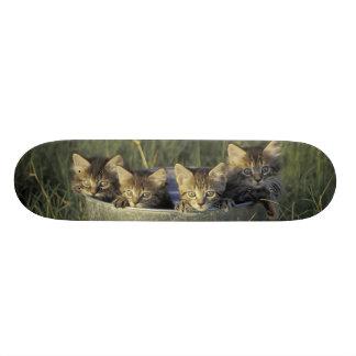 Na, Etats-Unis, la Floride, la Floride rurale. Plateau De Skateboard