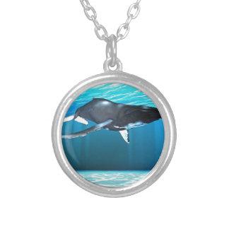 Natation de baleine de bosse colliers