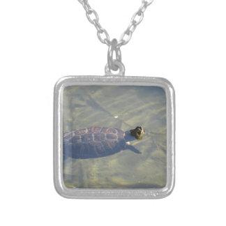 Natation de flottement de tortue dans un étang collier