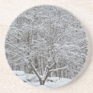 Neige sur l'arbre de cornouiller dessous de verres