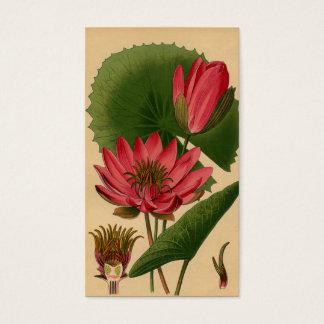 Nénuphar botanique vintage Lotus de rose Cartes De Visite