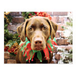 Noël - chocolat Labrador - Hershey Cartes Postales