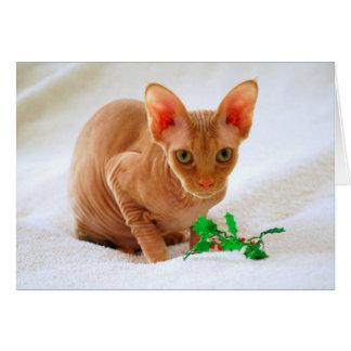 Noël de houx de chat de sphinx Joyeux Carte De Vœux