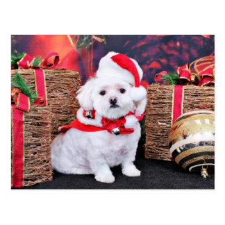 Noël - maltais - Zoey Carte Postale