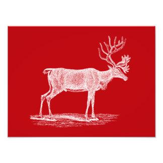 Noël rouge et blanc vintage de renne photographes