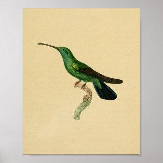 Noir 1830 de vert d'impression de colibri de cru