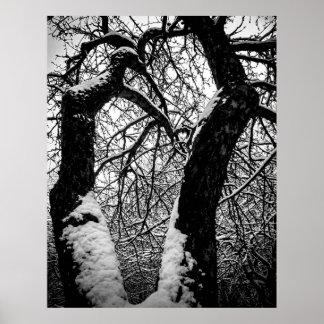 Noir et blanc, arbres et neige