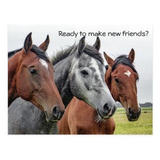 Nouvel accueil de chevaux d'amis de carte postale carte postale