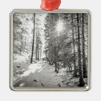Nuances de forêt de soleil d'hiver de gris ornement carré argenté