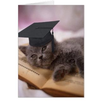 Obtention du diplôme, chat avec le casquette carte