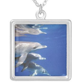 Océan atlantique a repéré des dauphins. Bimini, Collier
