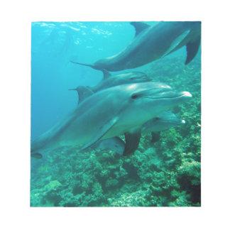 océan marin de poissons de dauphin sous le bain de blocs notes