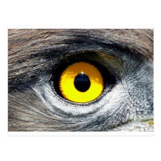 Oeil d'Eagle Carte Postale