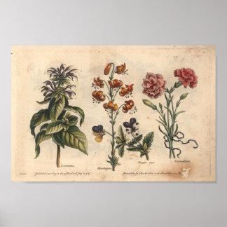 Oeillet botanique d'impression d'art de la fleur