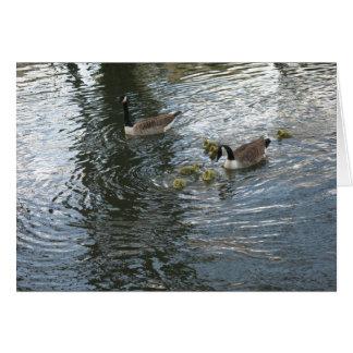 Oies et oisons du Canada sur la rivière Kennet Carte