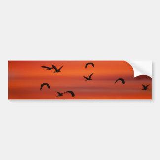 Oies sauvages volant au coucher du soleil autocollant de voiture