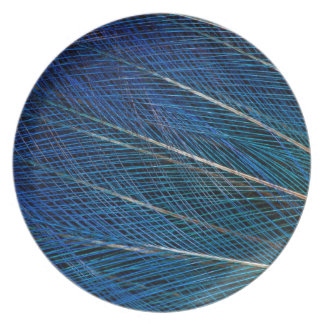 Oiseau bleu des plumes de paradis assiettes en mélamine
