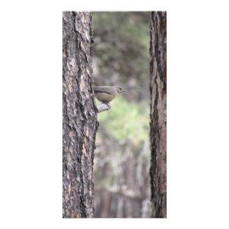 Oiseau bleu se reposant sur le membre d'arbre cartes avec photo